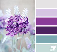 nature hues by design seeds.  Aqua, grape, orchid, lilac, linen.