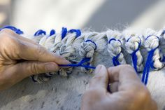 Beautify your hunter with this step-by-step mane braiding guide.