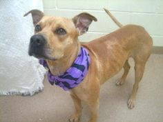 4 / 3    Petango.com – Meet Tasha, a 3 years 1 month Hound / Terrier, Pit Bull available for adoption in PALM CITY, FL Contact Information Address  4100 SW Leighton Farm Avenue, PALM CITY, FL, 34990  Phone  (772) 223-8822  Website  http://www.hstc1.org  Email  info@hstc1.org