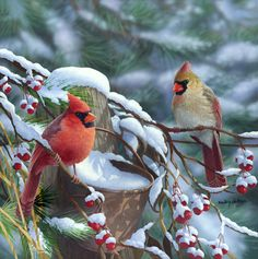 """Morning Glow ""- Cardinals by Bradley Jackson"