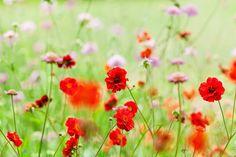 Katie Spicer Photography British Flowers