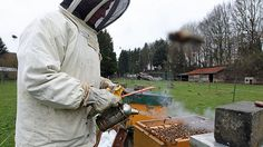 Ontarios agriculture ministry encourages farmers to let local beekeepers know when they plan to plant.
