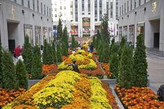 Rockefeller Center: A Complete Visitors Guide: Rockefeller Center Introduction and Directions