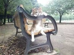 Nono-Chan the relaxed sitting cat is back, this time his owner filmed him chillin' on a park bench in Yokohama.