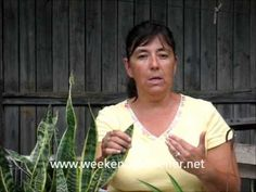 Gardening Tip:  Plants that Clean the Indoor Air (+playlist)