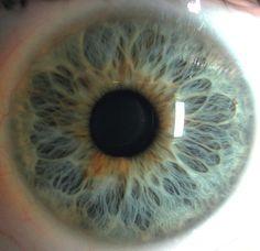 Eye   Iris   Pupil   目   œil   глаз   Occhio   Ojo   Color   Texture   Pattern…