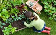 Bonnie Plants is a leading provider of plants for your vegetable garden or herb garden. Expert gardening tips help you with your plants. Organic Vegetables, Growing Vegetables, Root Vegetables, Veggies, Gardening For Beginners, Gardening Tips, Gardening Shoes, Homemade Bug Spray, Small Vegetable Gardens