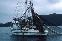 Alaska commercial fishing permits alaska commercial for Alaska commercial fishing jobs