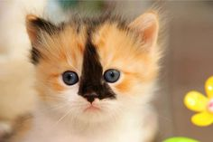 forlorn little kitty