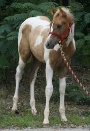 paint horses want one in the next life