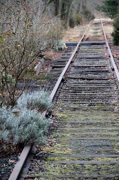 Train tracks take me back to my childhood as my grandmother and my little sister and I would look for asparagus along  side the rail road tracks , sweet memories ...