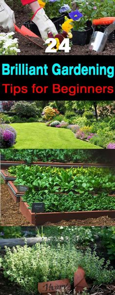 24 Brilliant Gardening Tips for Beginners | If you started gardening recently and tag yourself as a beginner then these '24 Gardening Tips for Beginners' are must be useful for you.