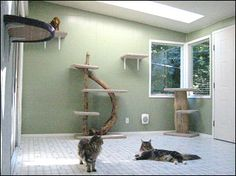 cat room..which will also be the 'man cave', lol, cat man has to share his man cave!