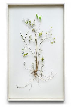 Flower Constructions by Anne ten Donkelaar via vtwonen