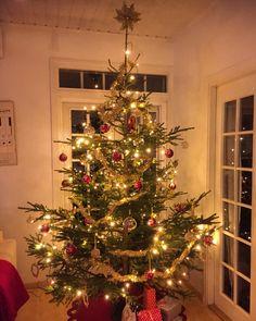 Joulupuu on rakennettu!