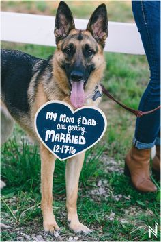 Cute DIY Save-the-Date sign for your dog to sport on your engagement session! Weddings and Engagements with Dogs | St. Louis Wedding Photography | St. Louis Engagement Photography | Dog Love | Cute Wedding Photos | North Arrow Creative | DIY Engagement Session Ideas