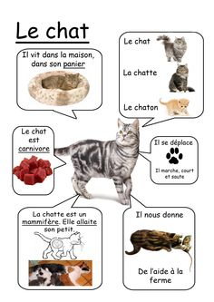 chat - animaux de la ferme #learnfrench http://www.uniquelanguages.com