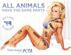 Pamela Anderson escribe al Senado español contra los toros