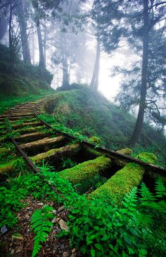 Jiancing Historic Trail, Taipingshan National Forest, Taiwan.
