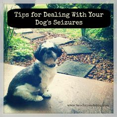 Its the worst thing to see your fur friend have seizures Change of diet / dog food . Essential oils have been wonderful help Dachshund Puppies For Sale, Dogs And Puppies, Dachshunds, Doggies, Dog Seizures, Essential Oils Dogs, Daisy Dog, Oils For Dogs, Dog Walking