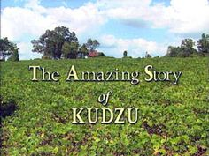 kuduz and its many uses. Every kid in the South can recognize kudzu. We like to see if there are shapes in them, similar to cloud watching.