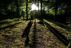 Arhus, Denmark    Photograph by Jeppe Jensen, My Shot    A boy walking through trees with rays of light streaming through in Arhus, Denmark
