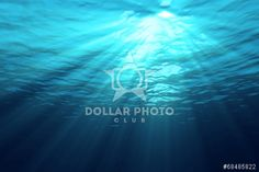 http://www.dollarphotoclub.com/stock-photo/Underwater/68485822 Dollar Photo Club millions of stock images for $1 each