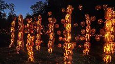 The Great Jack O' Lantern Blaze Lights Up the Hudson Valley With 4,000 Carved Pumpkins!   Inhabitat New York City