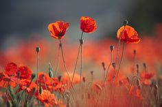 Red Spring (XX) by Camilo Margelí on 500px