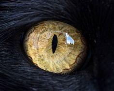 Магнетизирующие макрофотографии кошачьих глаз