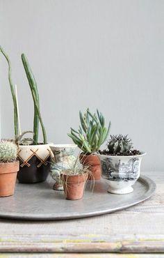 Plants on vintage tray