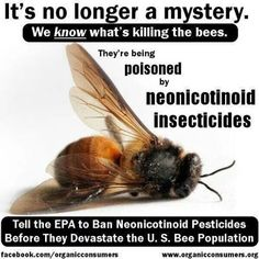 gmo-corn-treated-with-neonicotinoids-pesticides-manufactured-by-Bayer-Syngenta-kill-bees