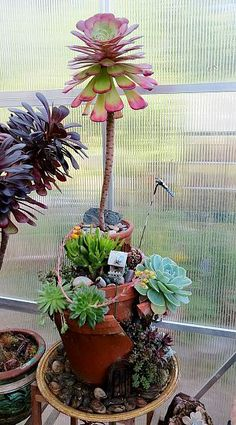 Broken pot succulent garden in a green house. Needs to be in a sheltred place due to wind. Succulent Gardening, Succulent Pots, Cacti And Succulents, Container Gardening, Broken Pot Garden, Garden Pots, Bonsai, Succulents In Containers, Exotic Plants