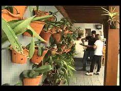 Cuidados necessários com as Orquídeas - YouTube