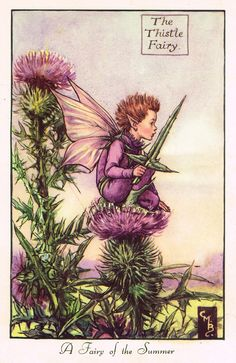 """Cicely Barker's Fairy Print - """"THE THISTLE FAIRY"""" - LARGE Children's Lithogrpah - c1955"""