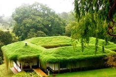 Fantastic Green Living Roof Designs
