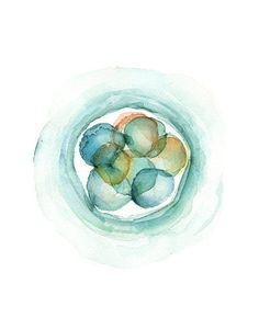3-day Embryo Art Print Embryology Watercolor Print by LyonRoad