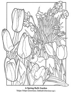 "iColor ""Gardens"" ~ ""In my garden there is a large place for sentiment. My garden of flowers is also my […] Make your world more colorful with free printable coloring pages from italks. Our free coloring pages for adults and kids. Spring Coloring Pages, Easter Coloring Pages, Flower Coloring Pages, Coloring Book Pages, Printable Coloring Pages, Coloring Pages For Kids, Free Coloring, Colouring Techniques, Dover Publications"
