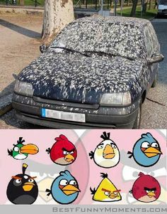 Funny pictures about Angry Birds. Not as fun in real life. Oh, and cool pics about Angry Birds. Not as fun in real life. Also, Angry Birds. Not as fun in real life. Lol, Haha Funny, Funny Stuff, Funny Things, Funny Shit, Funny Jokes, Random Stuff, Crazy Funny, Funniest Things