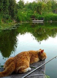 Sitting on the dock of the bay! Pretty Cats, Beautiful Cats, Animals Beautiful, Beautiful Creatures, Funny Cats, Funny Animals, Cute Animals, Adventure Cat, Curious Cat