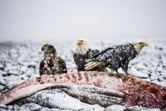 Survival Photo by April Bencze -- National Geographic Your Shot