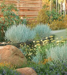 Australian Native Greenvale garden, Victoria, Australia Very similar climate to Albuquerque Bush Garden, Dry Garden, Cottage Garden Plants, Hill Garden, Night Garden, Coastal Gardens, Small Gardens, Outdoor Gardens, Australian Garden Design