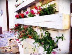 a vertical garden in Sardinia