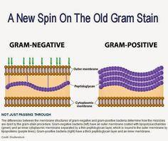 A New Spin On The Old Gram Stain