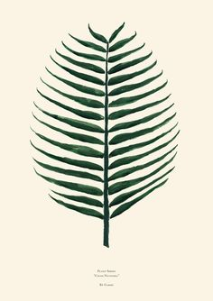 "Plant Series Cocos Nucifera ( Cocos plant ) This is the second poster in by Garmi's Plant Series. The Plant Series is an ongoing poster series of various plants, leafs and flora. 19.75"" x 27.5"" Green"