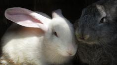 Bunnies!!!