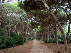 Feniglia pineta - Maremma, Tuscany - Italy