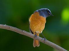 pájaro pájaros naturaleza animal