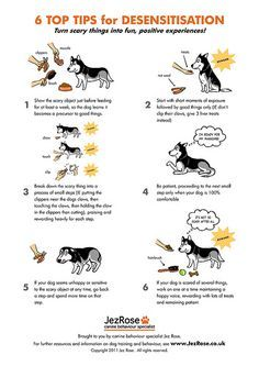 You can desensitize your dog to things that she is afraid of by using positive reinforcement which leaves your dog with a positive association to the object. However it is always best to start socializing and puppy classes with your dogs early to desensitize them from the start and end up with a much more confident dog