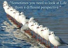 Image result for jonathan livingston seagull quotes